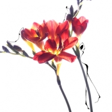 painting_image_42